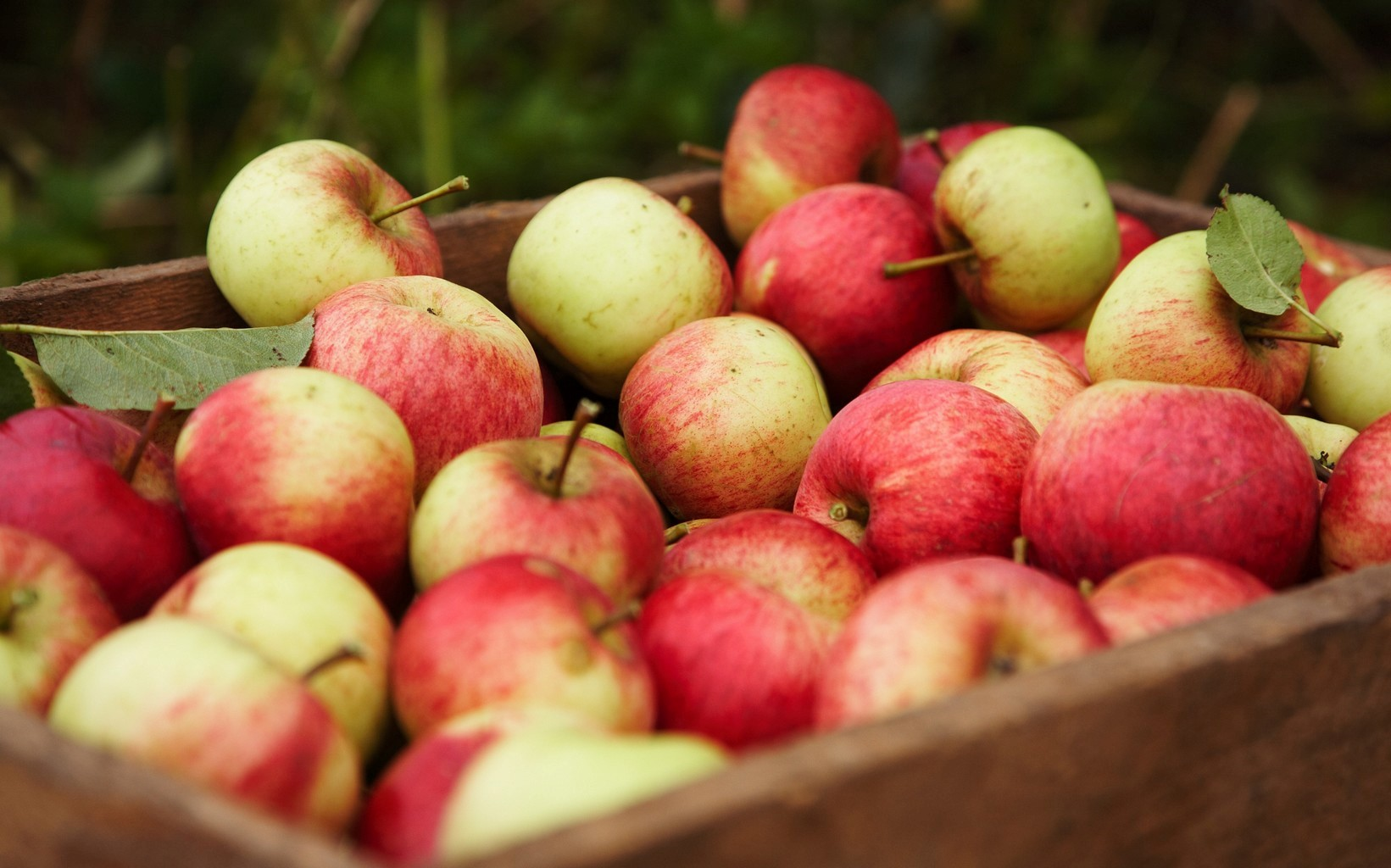 Rappel de pommes granny smith et gala en raison de la - Quoi faire avec des pommes de pin ...