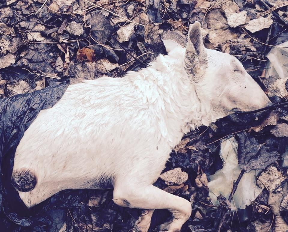 Bête retrouvée morte dans Fabreville : il s'agit d'une mort naturelle - L'Écho de Laval